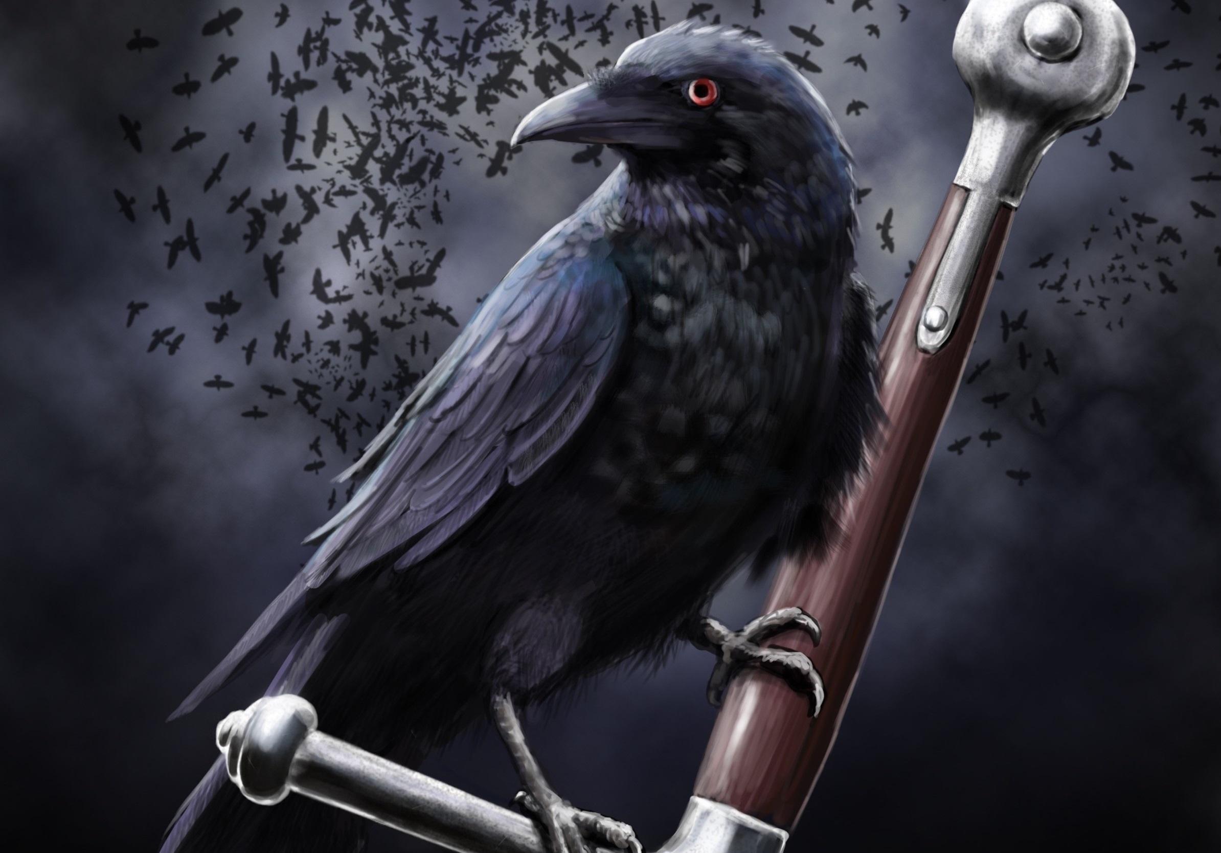 corvo-do-norte-2-forma-de-corvo