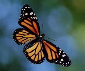 borboleta-voando_5012897756f3c-p