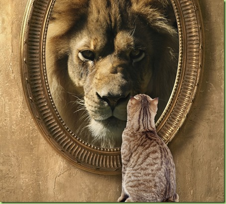 cat-looking-in-mirror-sees-lion_thumb[1]