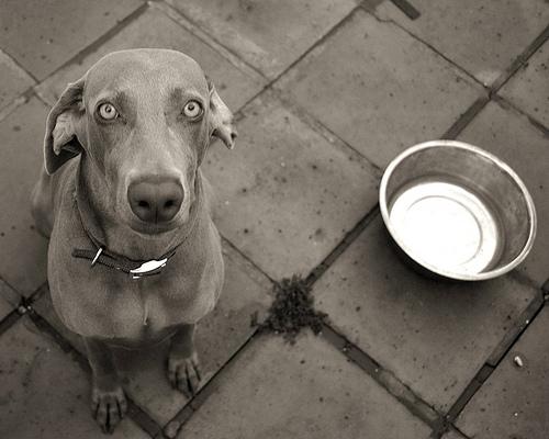 cachorro-fome